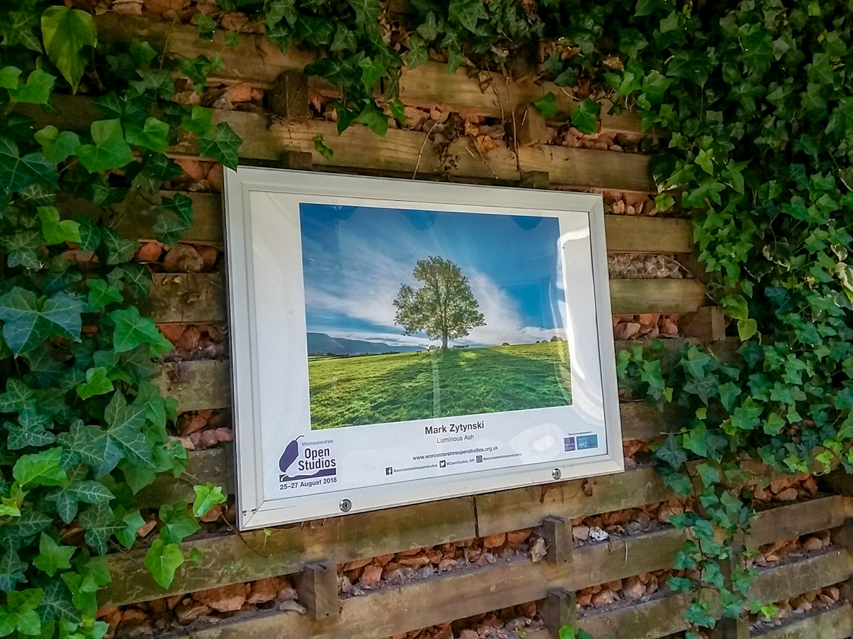 Malvern-art-exhibition-ash-tree-131927.jpg