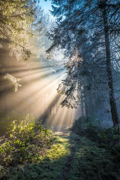 H - Misty Woodland