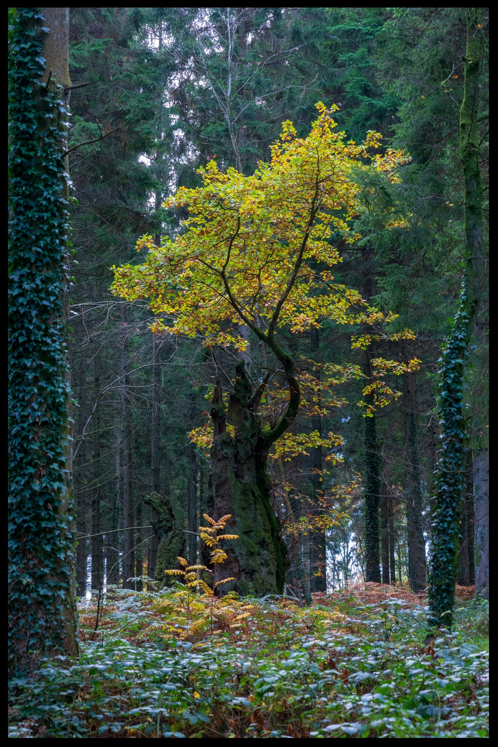 Zytynski-Autumn-Woodlands-16.jpg