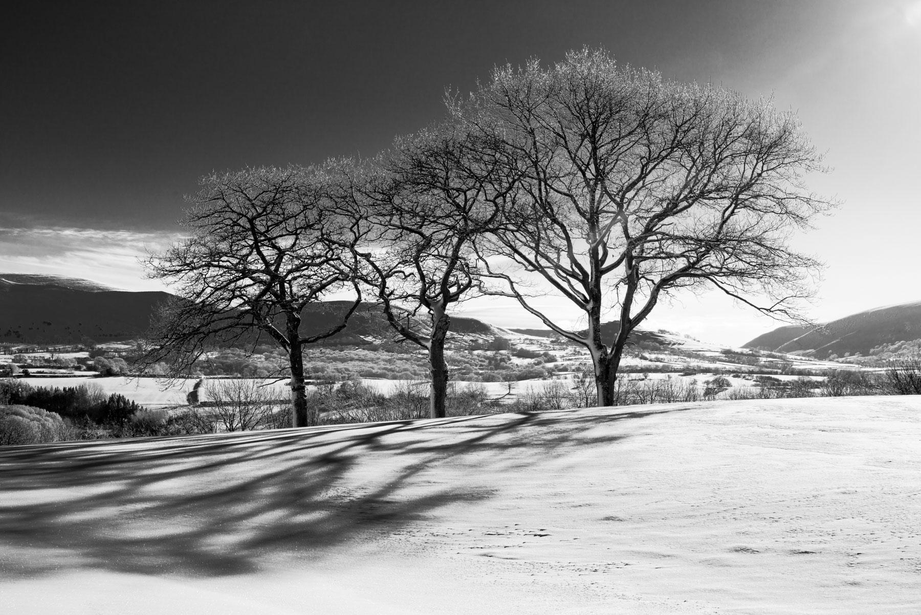 Three Oaks on a Hill