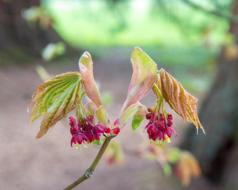 Zytynski-Westonbirt-Spring-5115.jpg