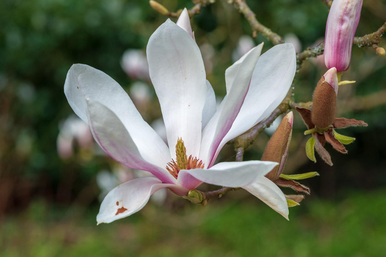 Zytynski-Westonbirt-Spring-5156.jpg