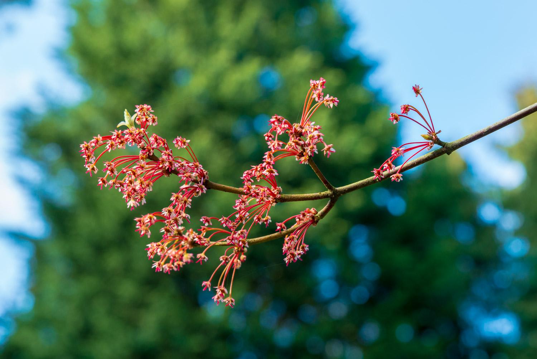 Zytynski-Westonbirt-Spring-5296.jpg