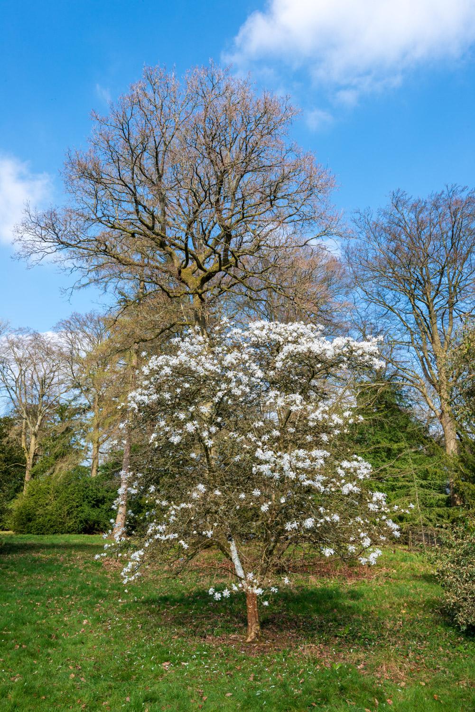 Zytynski-Westonbirt-Spring-5207.jpg