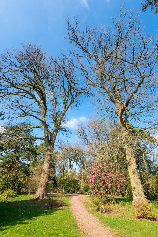 Zytynski-Westonbirt-Spring-5347.jpg