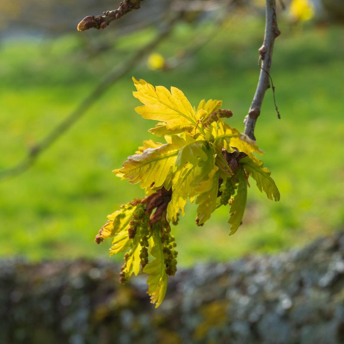 Zytynski-Eastnor-Spring-5533.jpg