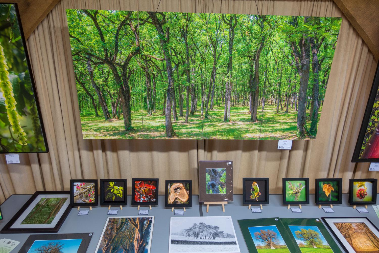 Westonbirt-exhibition-4.jpg