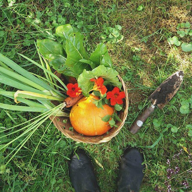 I'd be lying if I said I didn't miss meat, but that squash is the best thing I've ever eaten.  #organic #organicfarming #organicfood #food #fastfood #floristvacay #edibleflowers #permaculture #gelderland #netherlands #dinner #nasturtium #squash