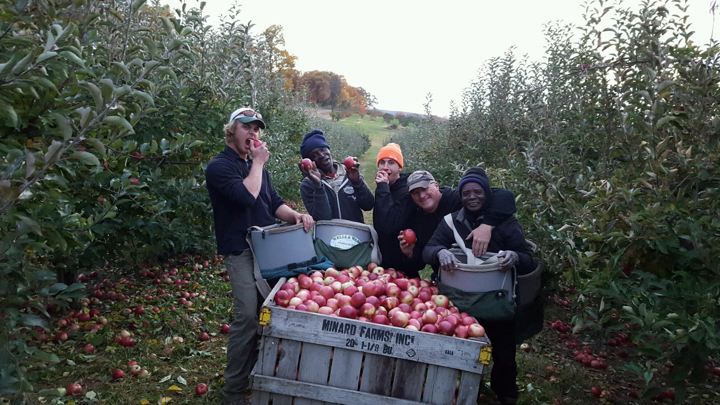 SJ and Stephen Pennings picking apples with employees
