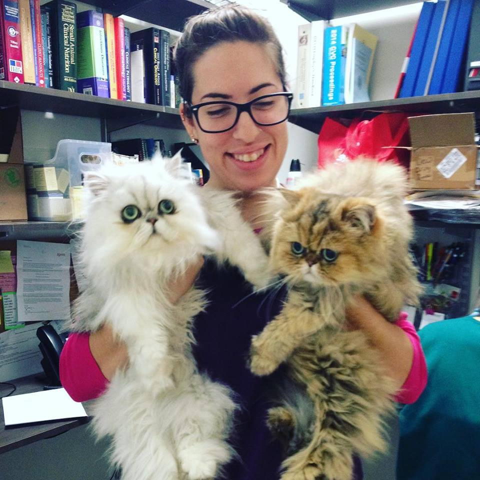 Clarendon Animal Care Veterinary Clinic Arlington Virginia Staff with Two Persian Cats