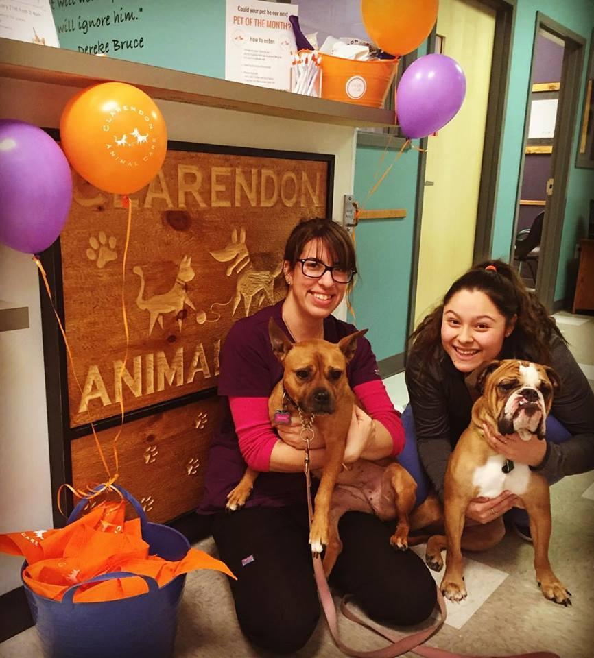 Clarendon Animal Care Veterinary Clinic Arlington Virginia Staff with Dogs