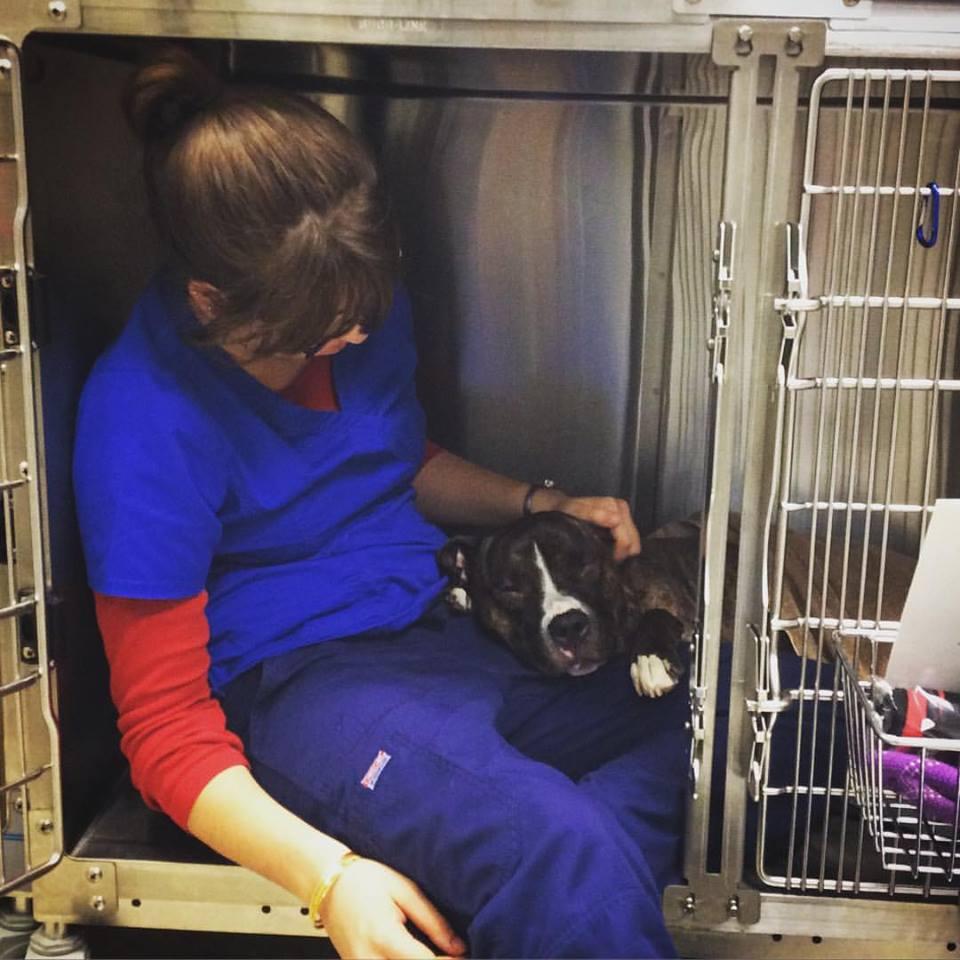 Clarendon Animal Care Veterinary Clinic Arlington Virginia Technician Caring for a Dog