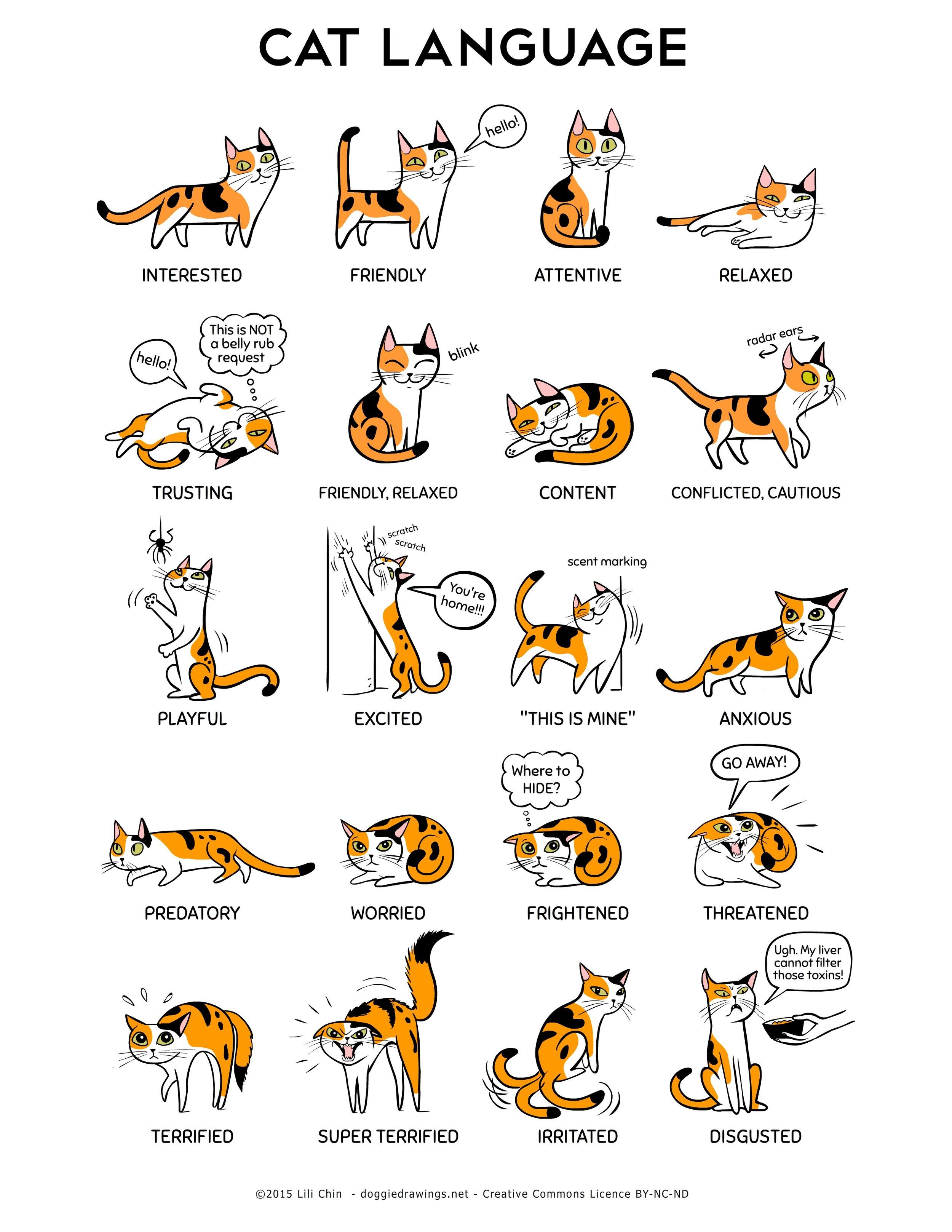 Clarendon Animal Care Veterinary Clinic Arlington Virginia Assistant cat language fear free chart