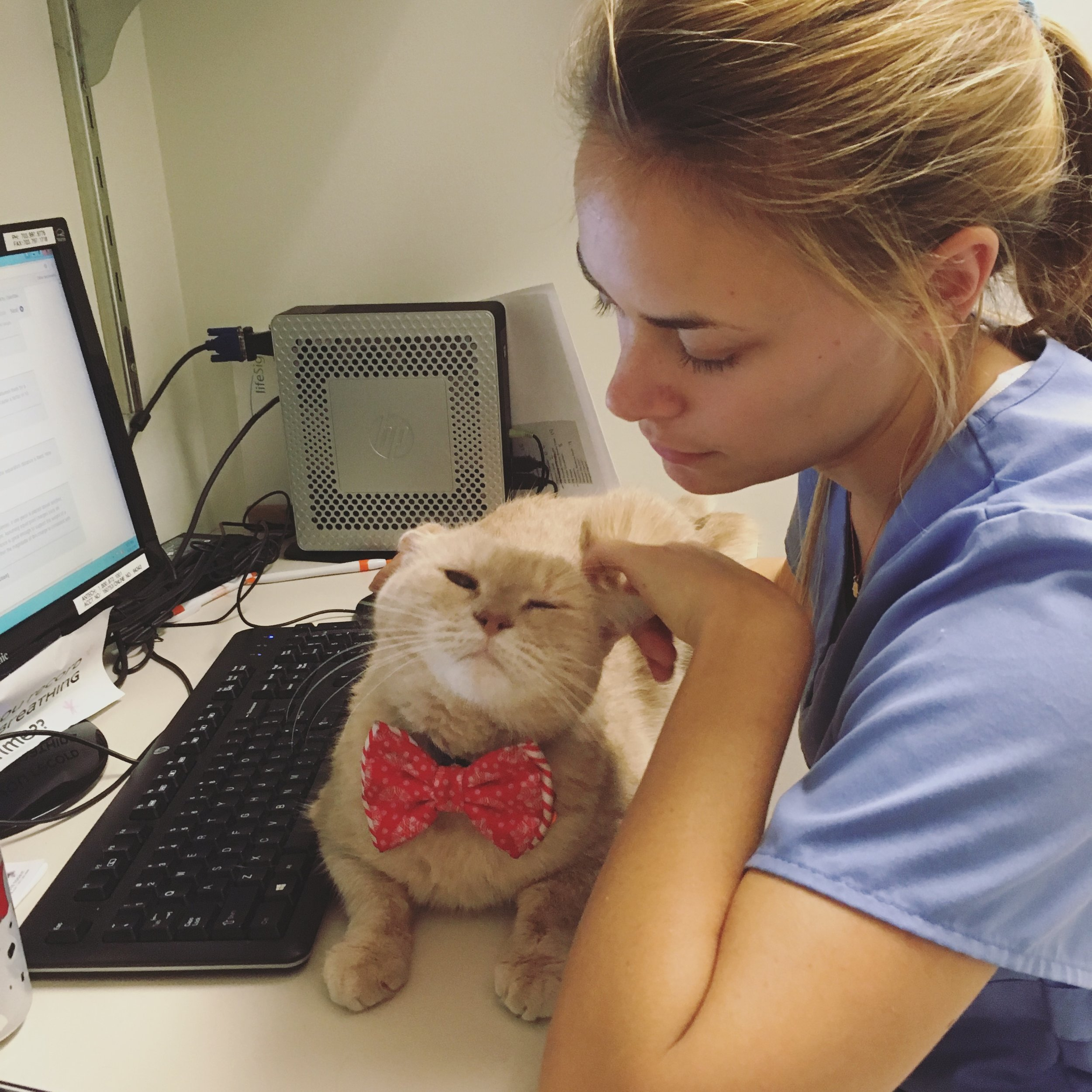 Clarendon Animal Care Veterinary Clinic Arlington Virginia Staff with the Clinic Cat Tommy