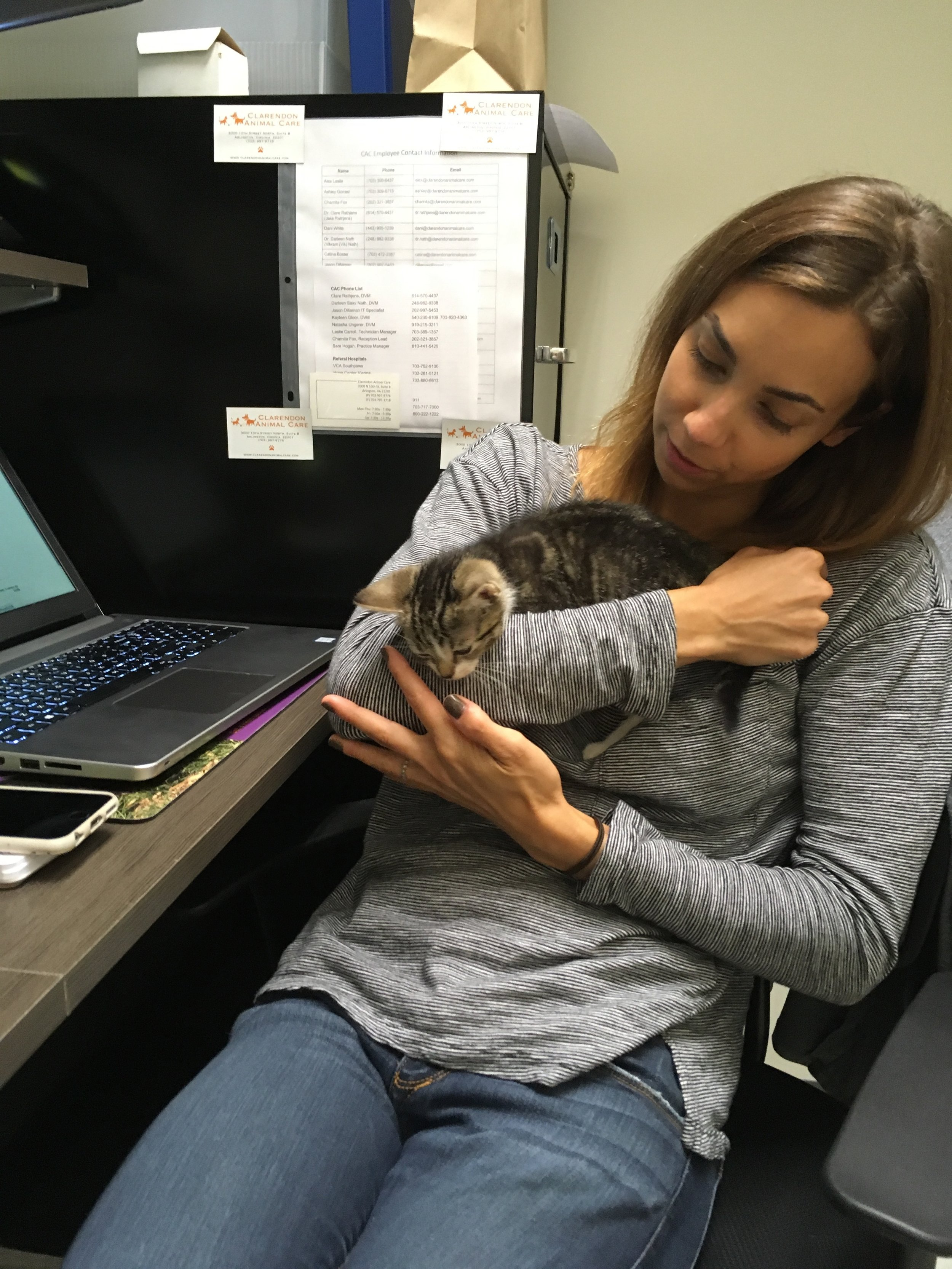Clarendon Animal Care Veterinary Clinic Arlington Virginia practice manager with a kitten