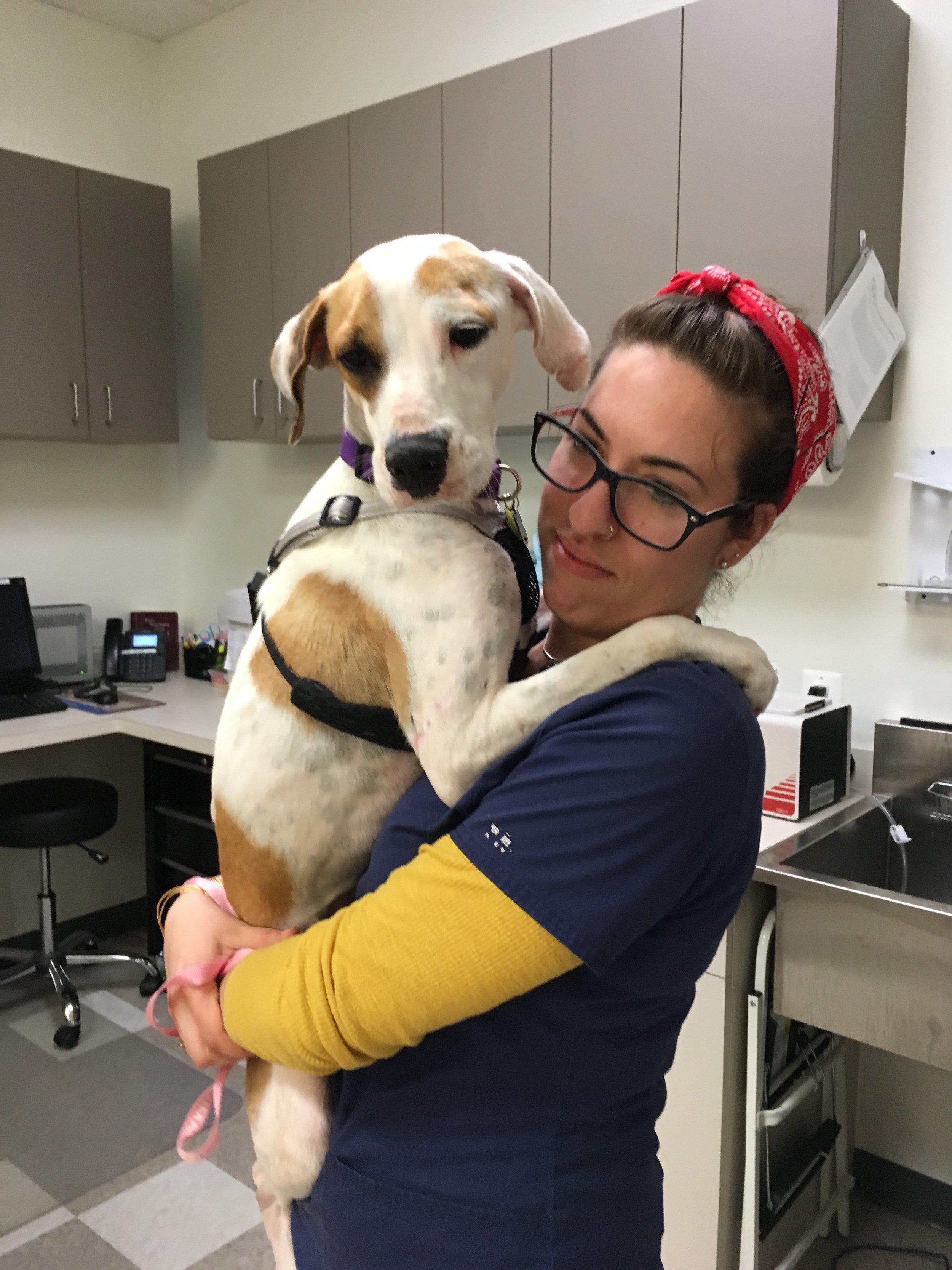Clarendon Animal Care Veterinary Clinic Arlington Virginia technician holding a dog