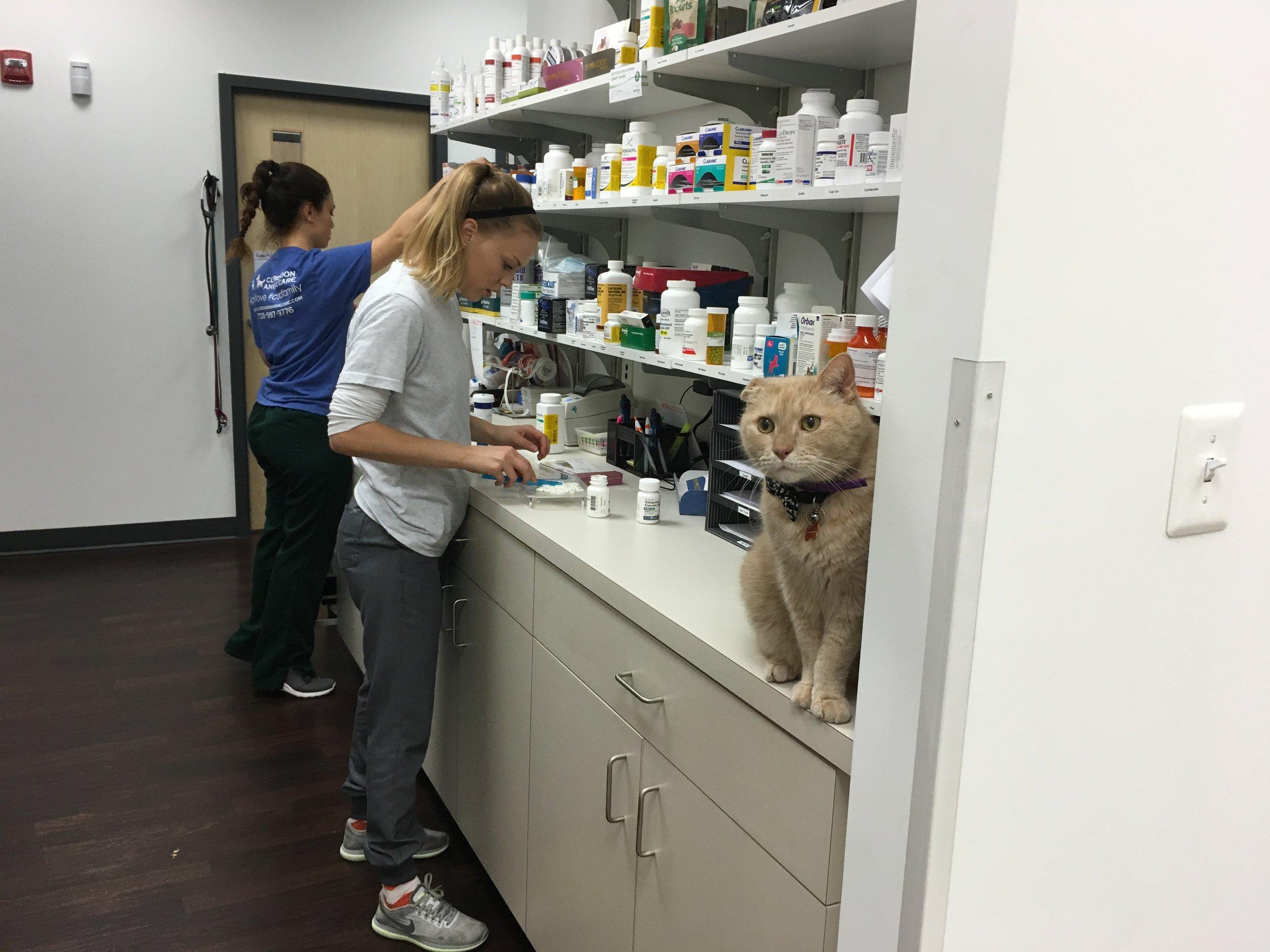 Clarendon Animal Care Veterinary Clinic Arlington Virginia Assistant in the pharmacy