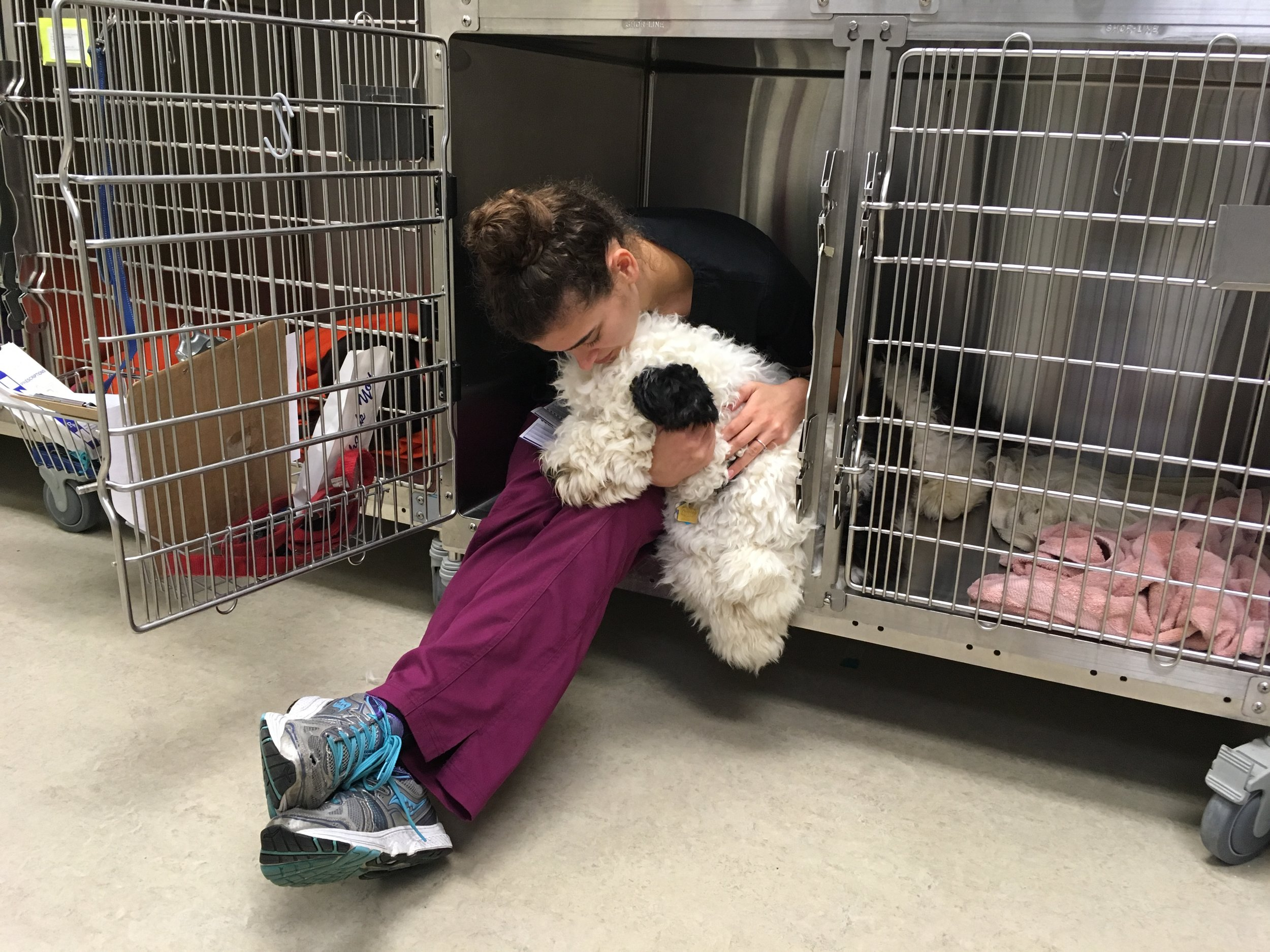 Clarendon Animal Care Veterinary Clinic Arlington Virginia Assistant caring for a dog