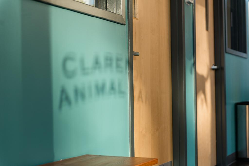 Clarendon Animal Care Veterinary Clinic Arlington Virginia