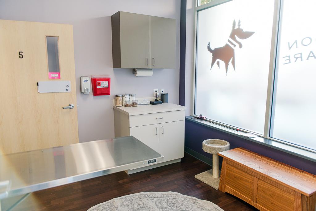 Clarendon Animal Care Veterinary Clinic Arlington Virginia cat exam room
