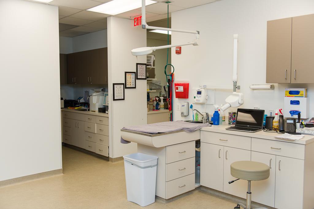 Clarendon Animal Care Veterinary Clinic Arlington Virginia examination table