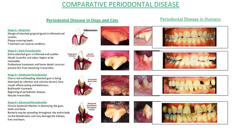 Clarendon Animal Care Comparative Periodontal Disease.png
