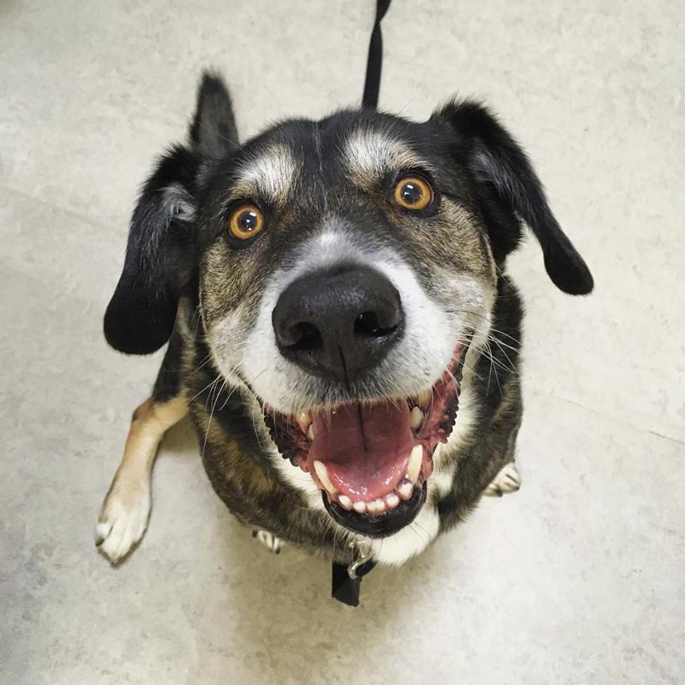 Clarendon Animal Care Smiling Dog Dental Health.jpg