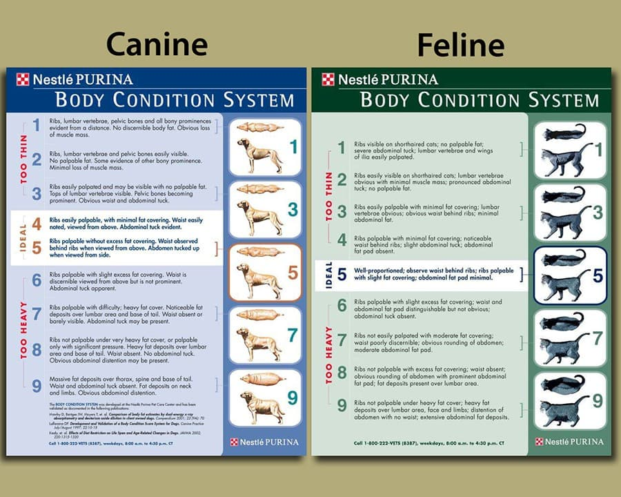 pet-body-condition-system.jpg