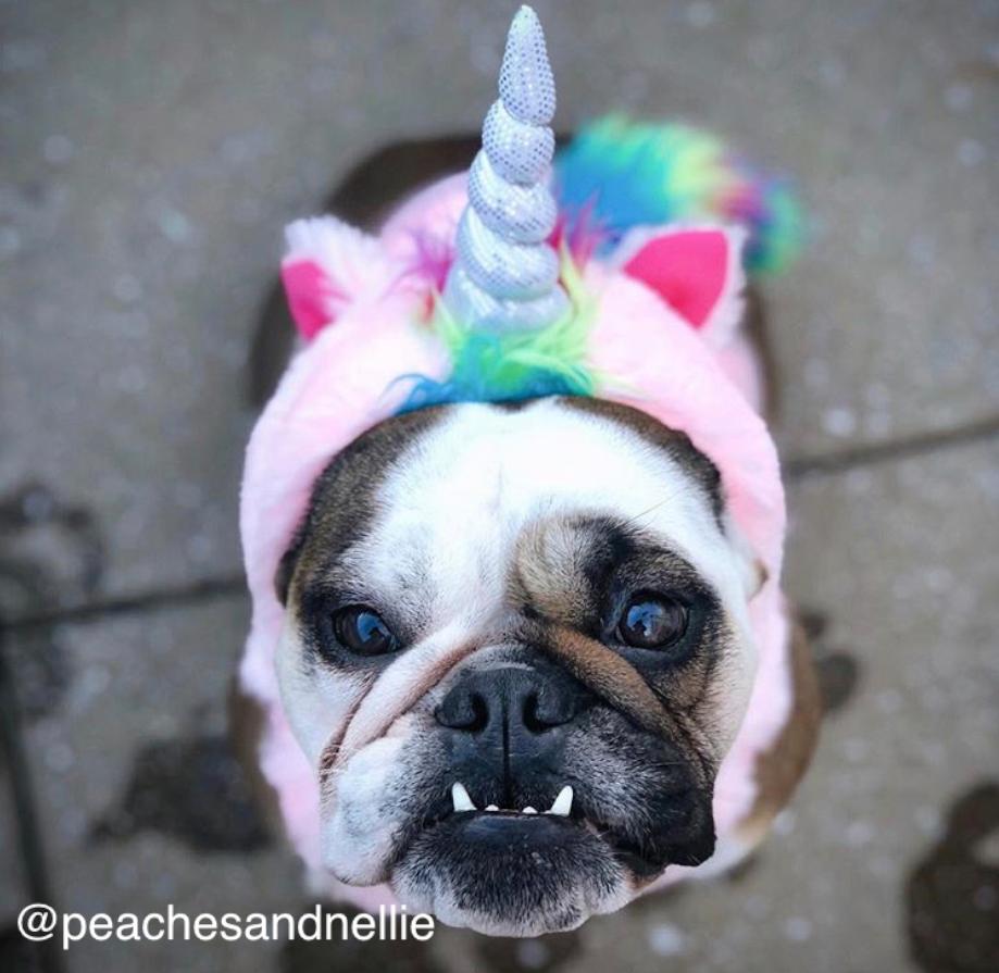 Clarendon-Animal-Care-Halloween-Pet-Costume-Contest-Arlington-Virginia-Veterinarian-03.png