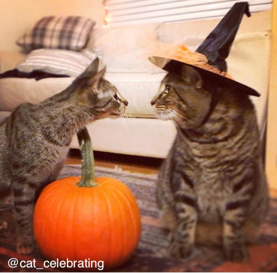 Clarendon-Animal-Care-Halloween-Pet-Costume-Contest-Arlington-Virginia-Veterinarian-02.png