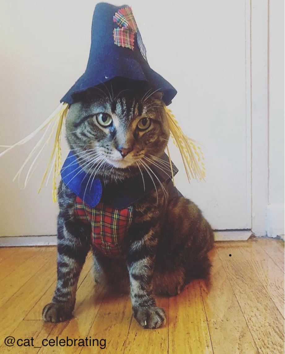 Clarendon-Animal-Care-Halloween-Pet-Costume-Contest-Arlington-Virginia-Veterinarian-04.png