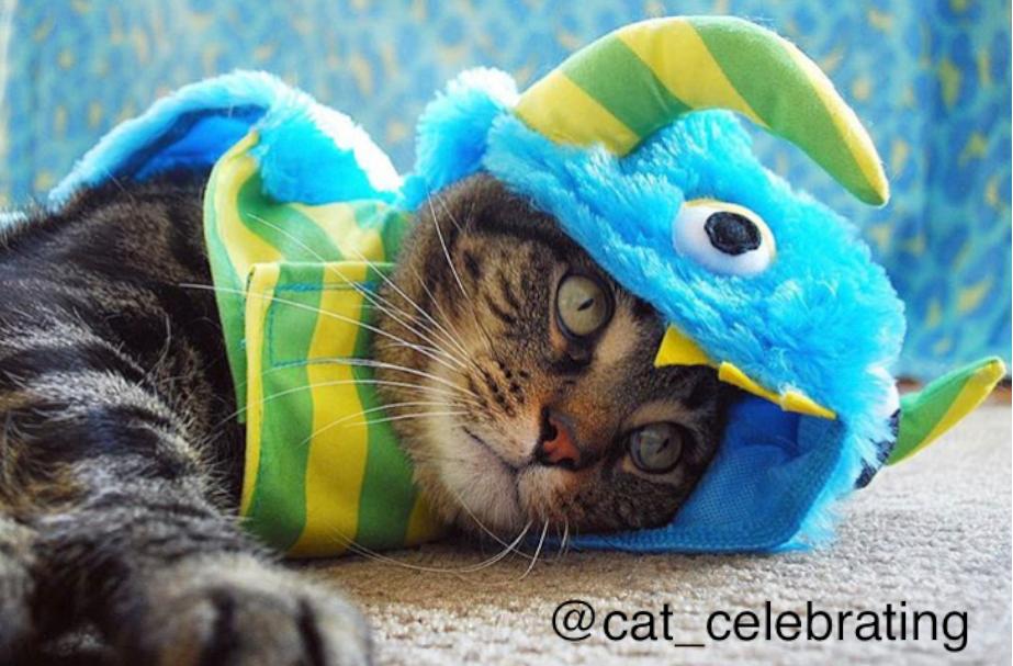 Clarendon-Animal-Care-Halloween-Pet-Costume-Contest-Arlington-Virginia-Veterinarian-07.png