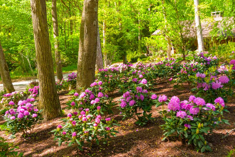 Fernstone Flowers & Landscaping-34.jpg
