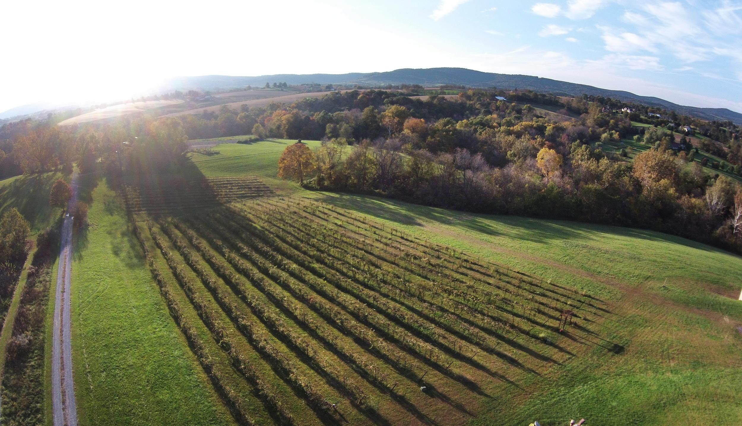 The vineyard via drone