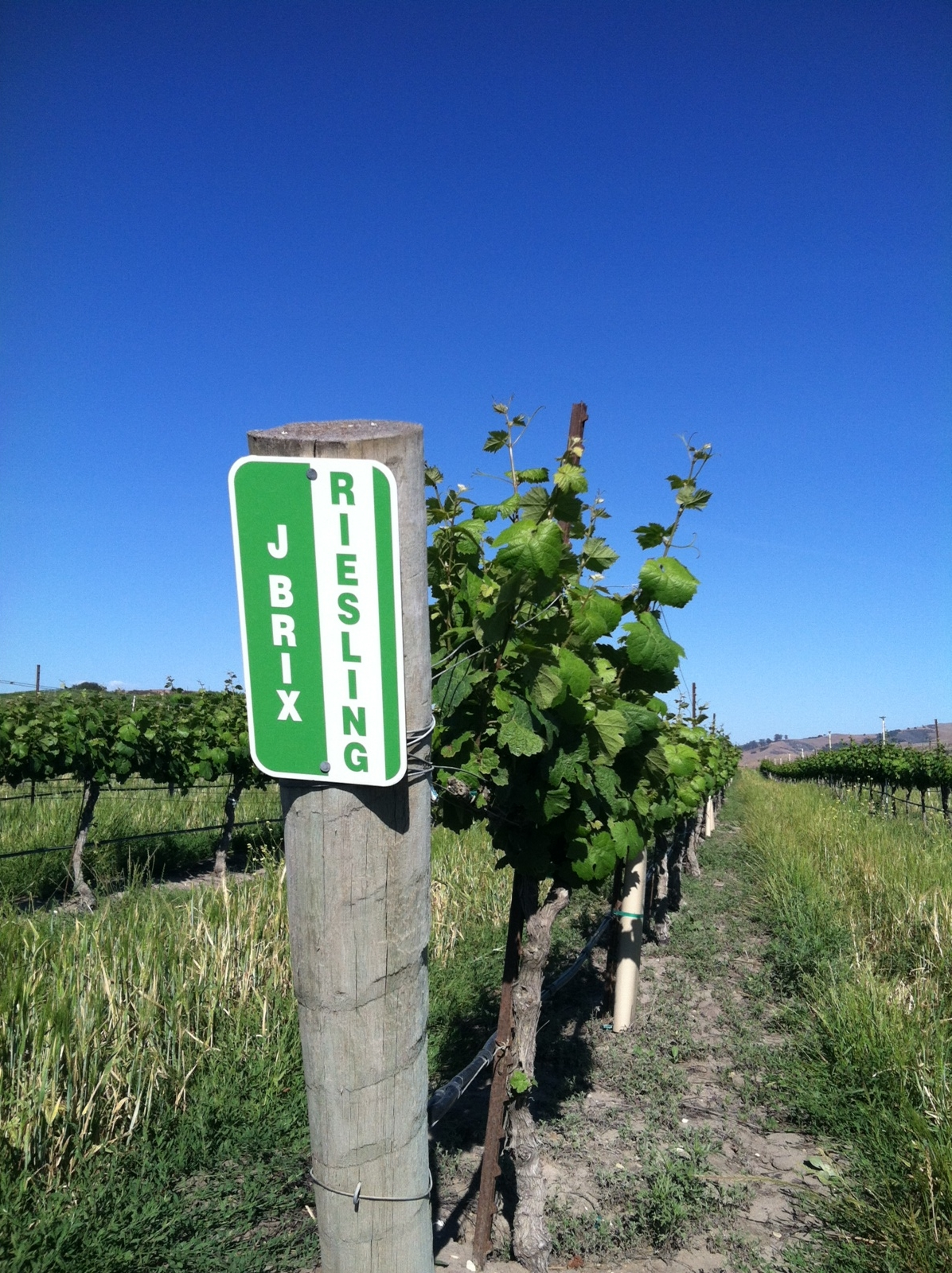 J. Brix Riesling sign on vineyard post
