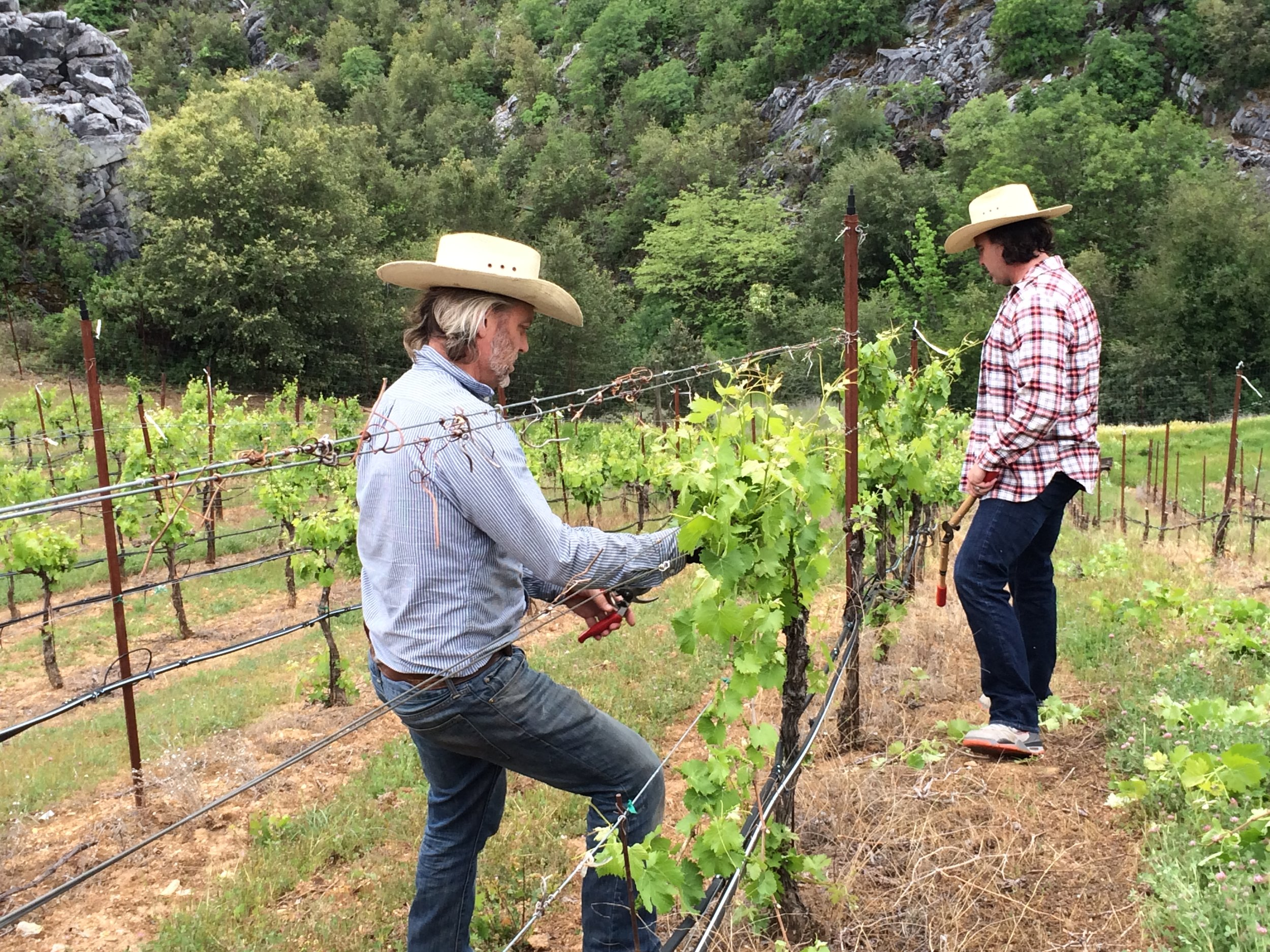 Two winemakers cutting back vines