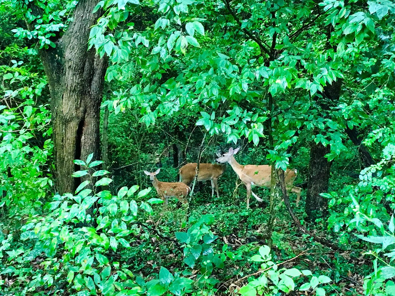 Nature walk in Bentonville, AR.