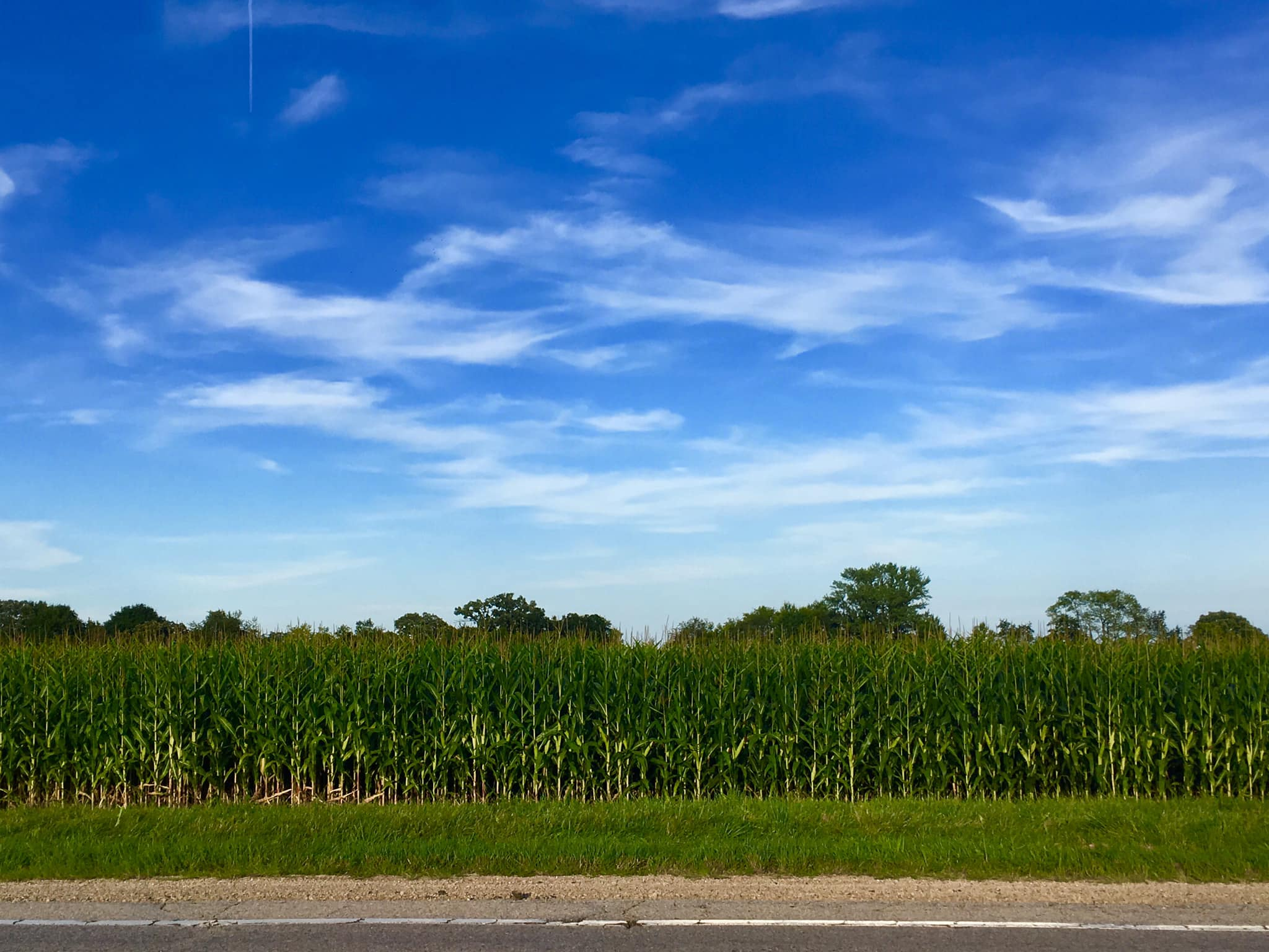Corn season USA.