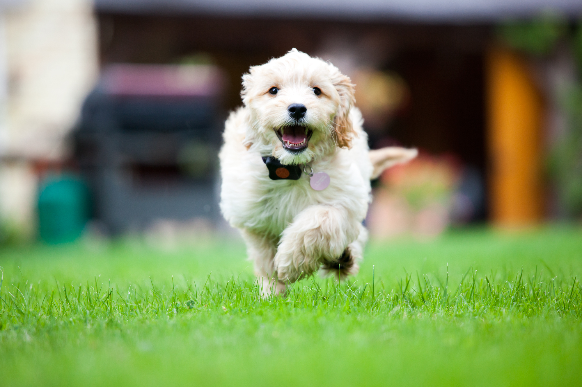 PitPat - The Dog Activity Monitor