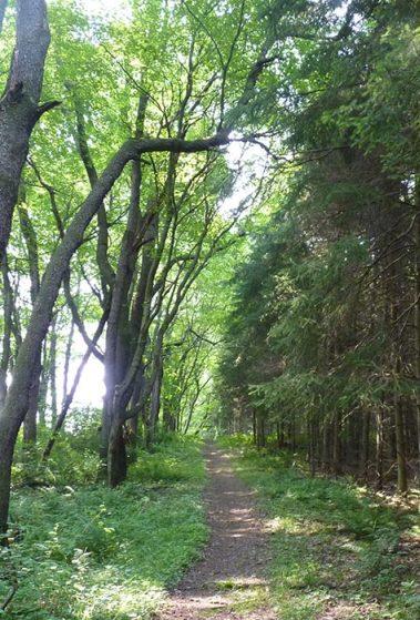 path through the woods.jpg