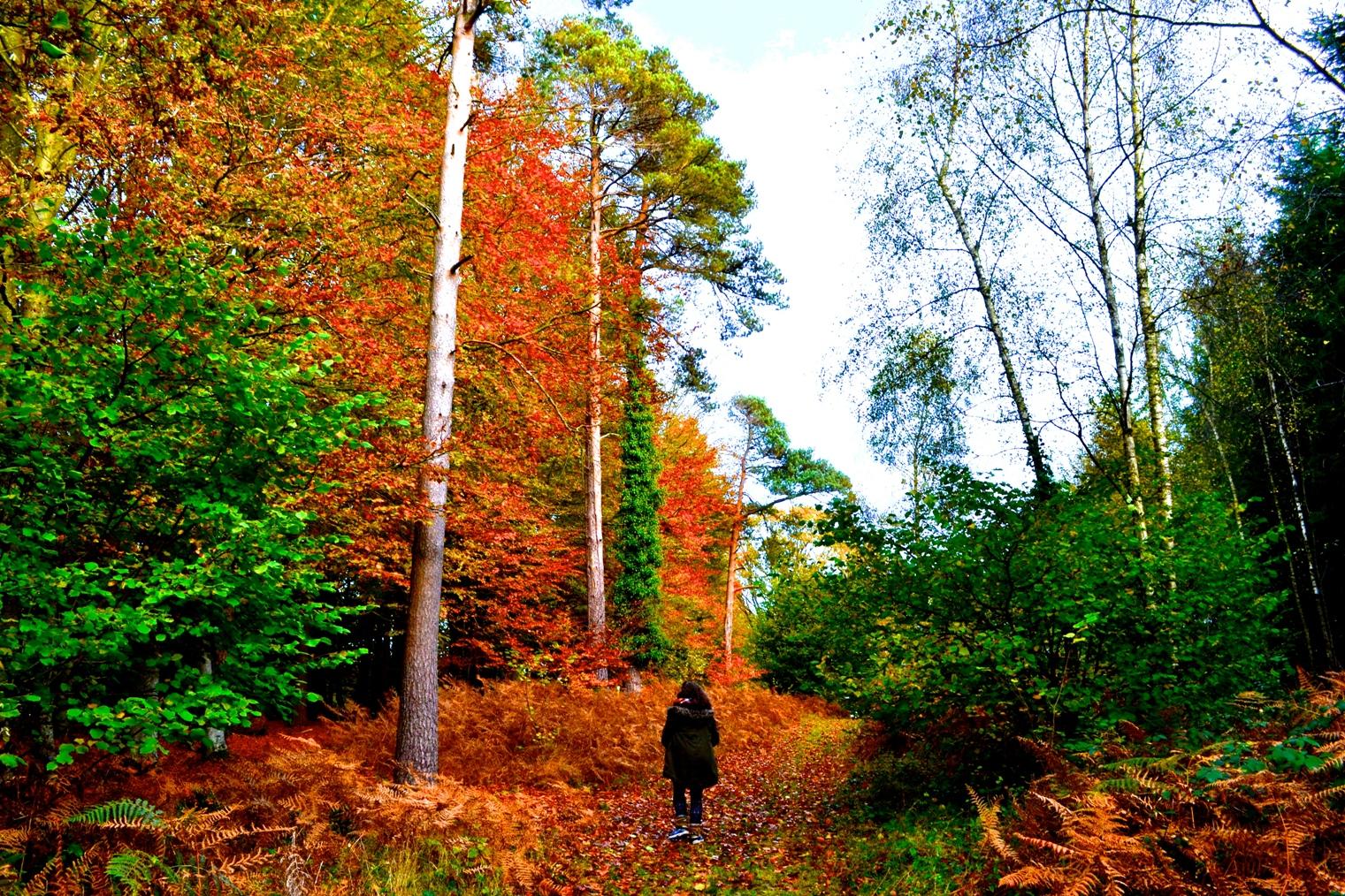 autumn edit.JPG