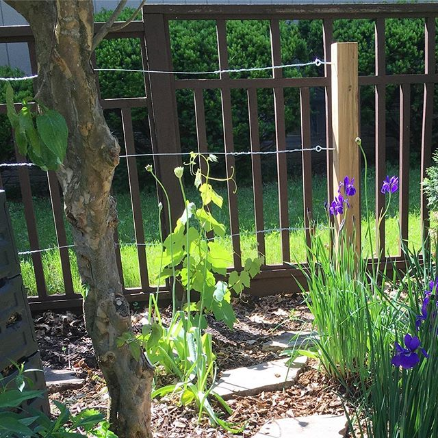 Happy Memorial Day. Today I built a grapevine trellis for Jane.