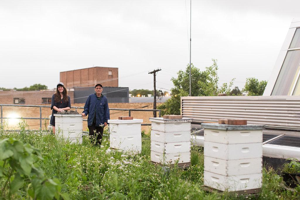 Honey CoOp Hives