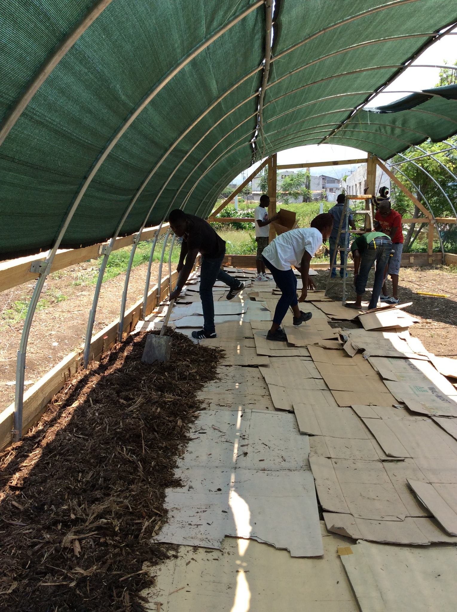 Prepping the ground. Layer of cardboard covered by sugar cane mulch
