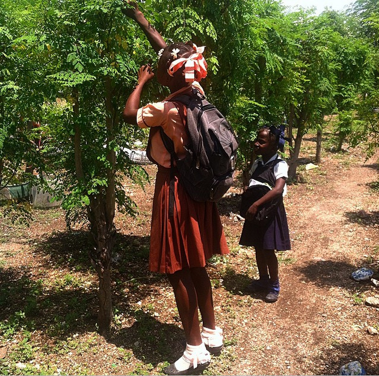 The Moringa tree is used for food, shade, fencing, and more