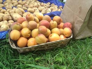 Apricots!! Yum.