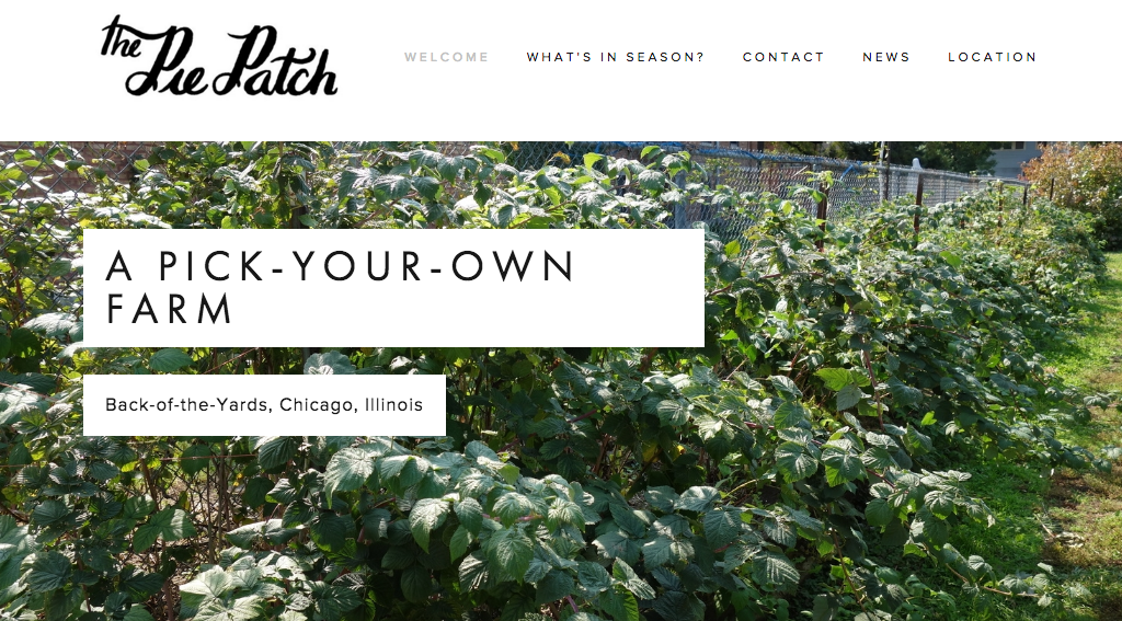 The Pie Patch is a pick-your-own farm located at 5045 S Laflin in the Back of the Yards of Chicago that grows produce traditionally used in baking pies.