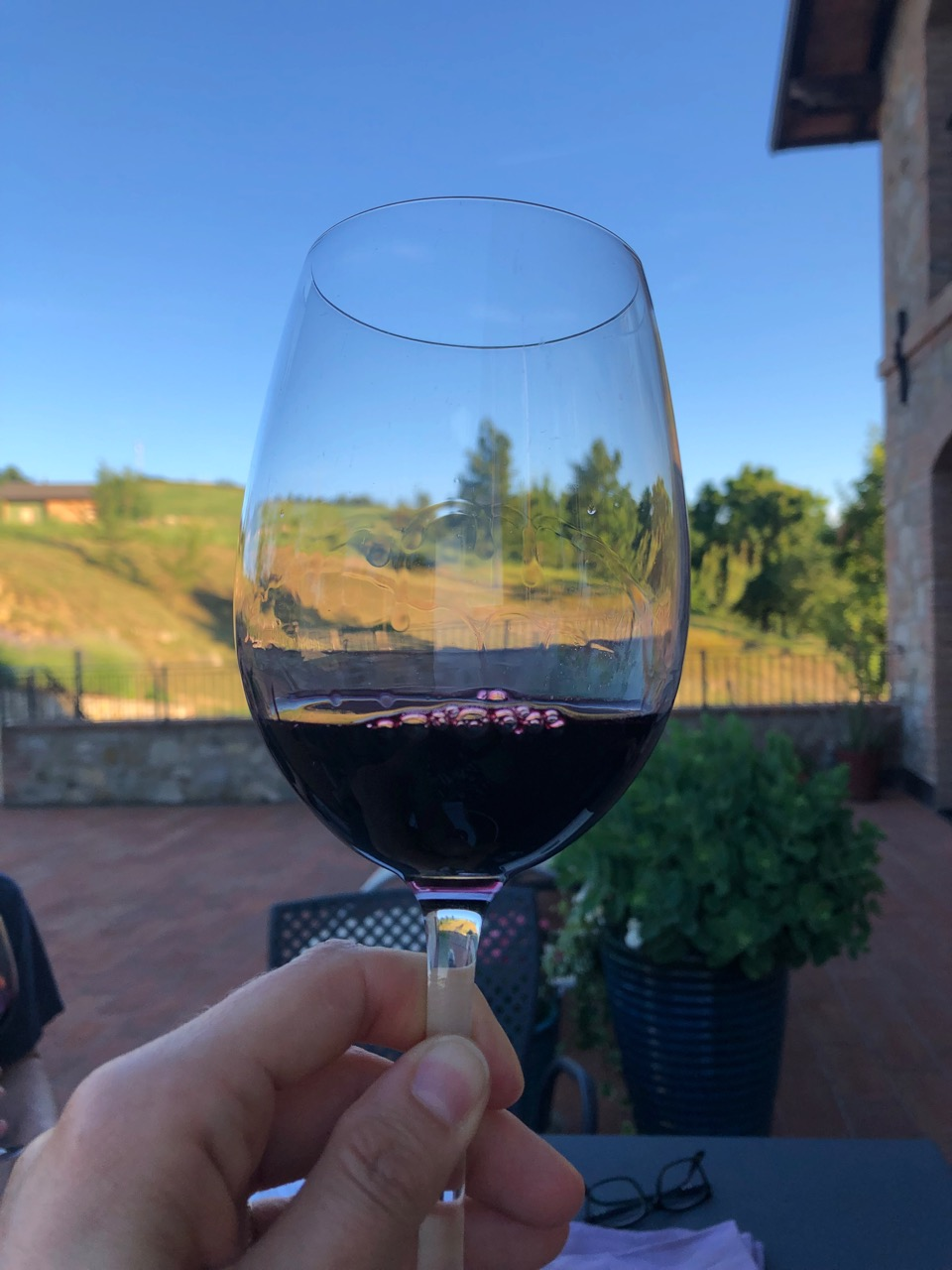 Festasio, a wine that almost vanished due to the popularity of Lambrusco grapes taking over the landscape. (Image provided by Rebecca Margolis.)