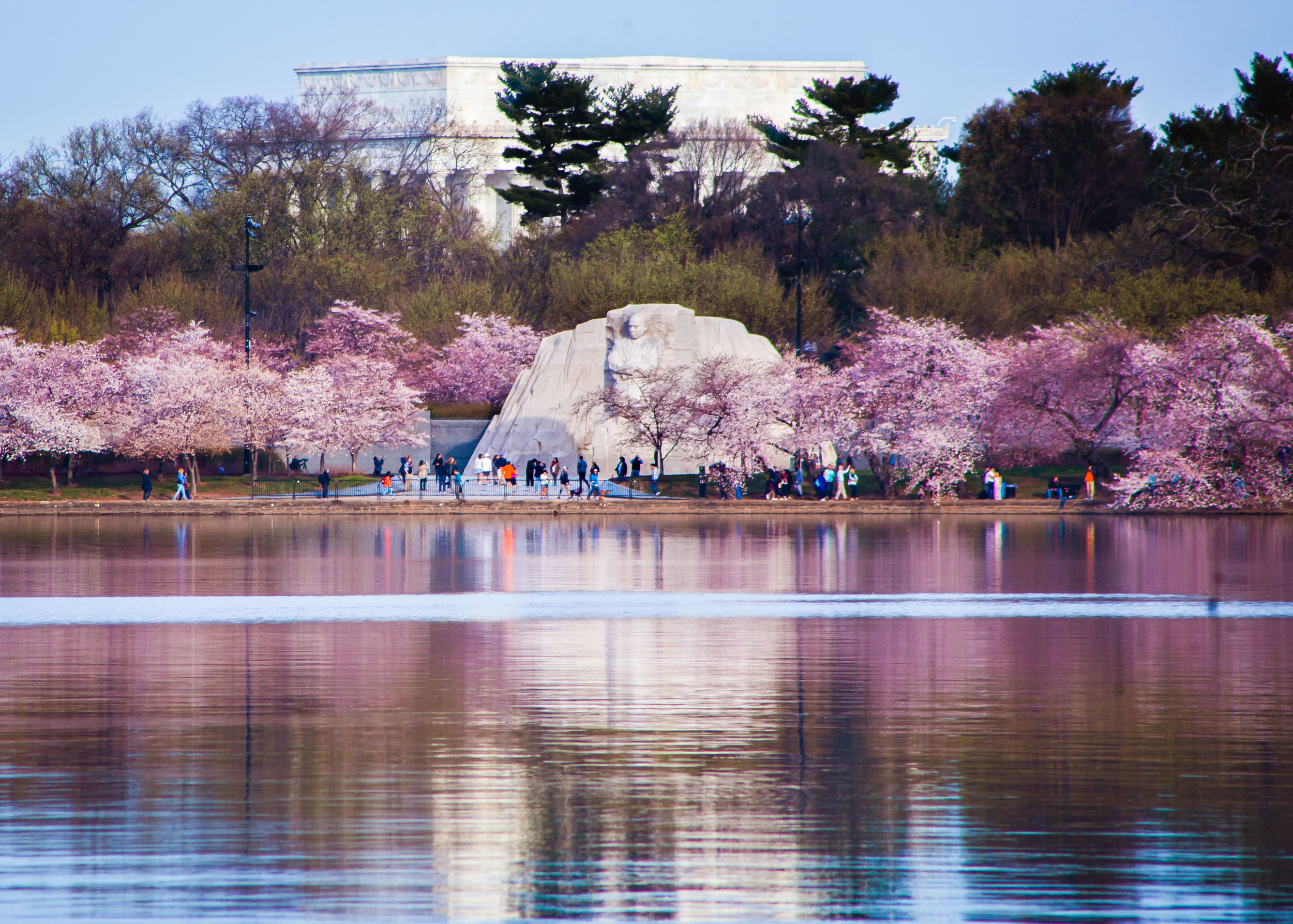 Cherry Blossoms 2017 - 014 (1).jpg
