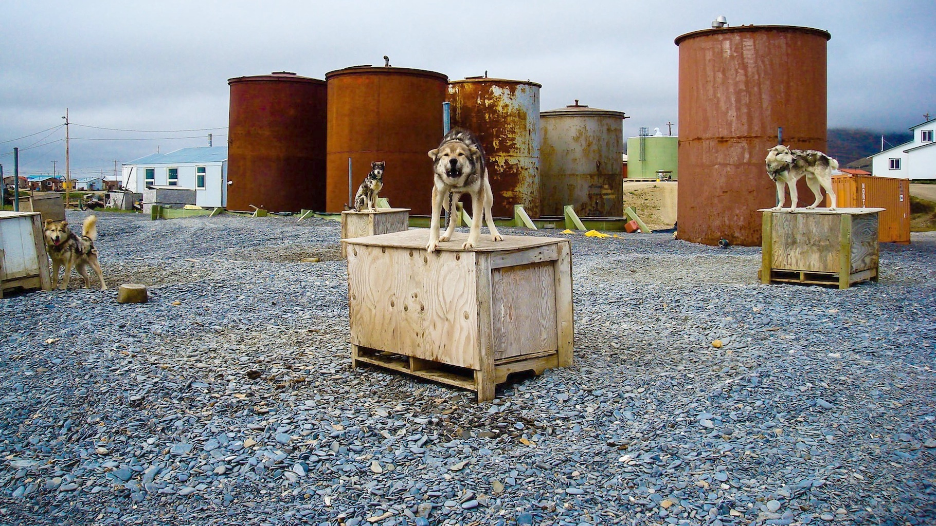 Alaska - Eskimo village on the Bering Sea with Sled Dogs.jpg